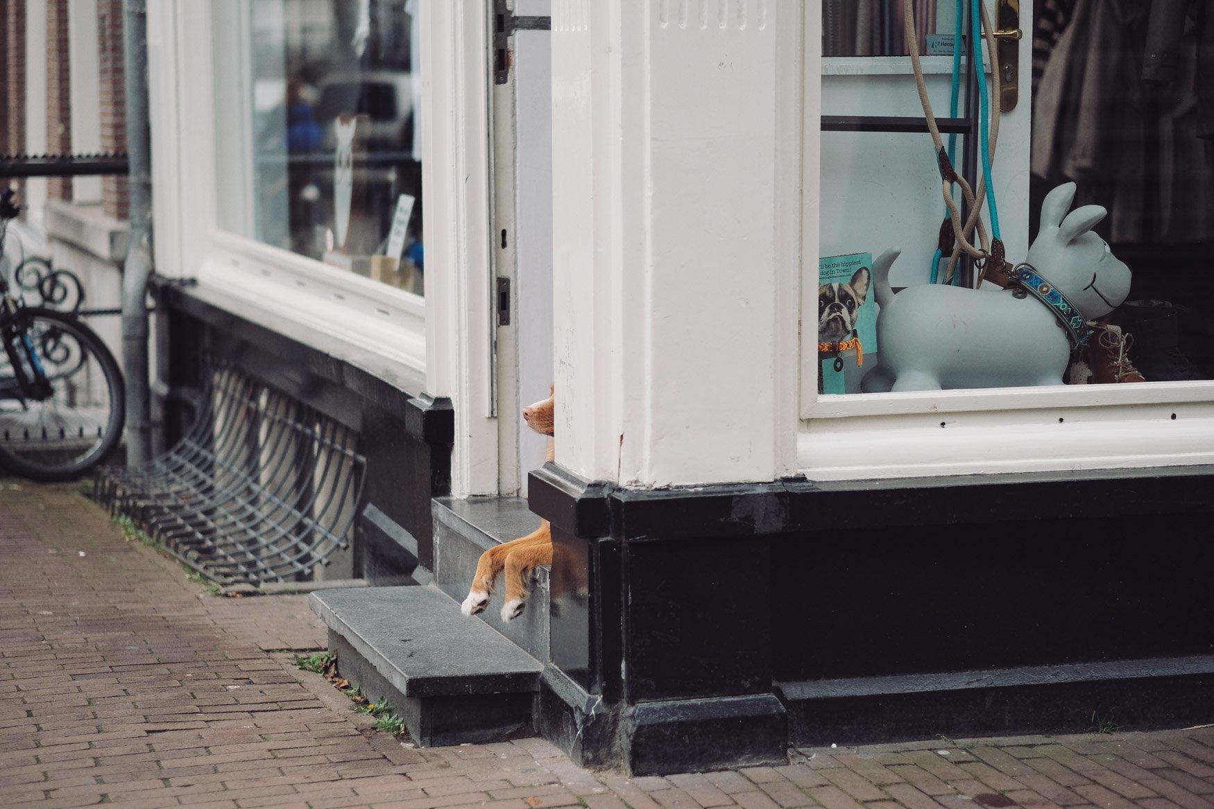 dogs amsterdam