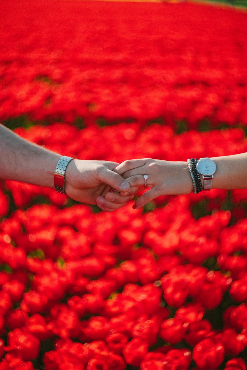 surprise proposal photoshoot tulip field