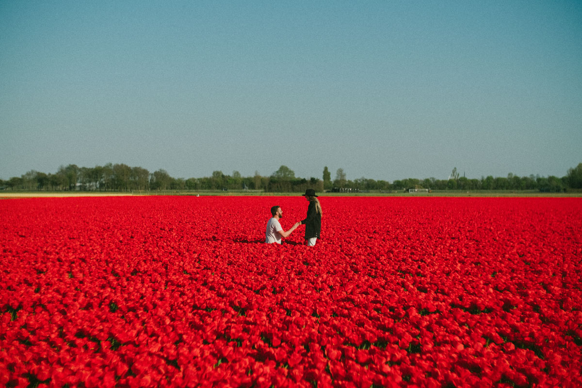 proposal photography amsterdam tulip fields