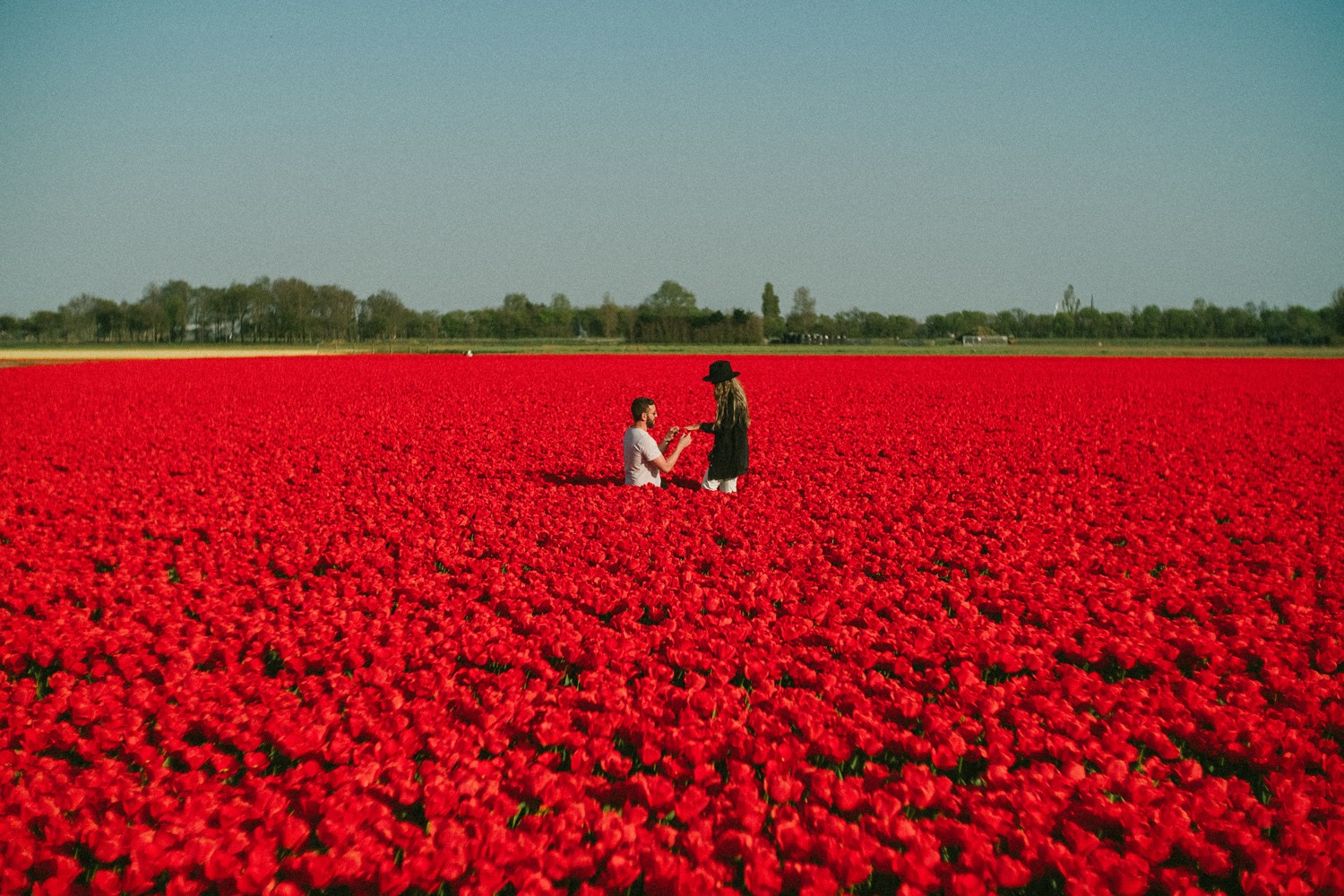 surprise proposal tulip field photography