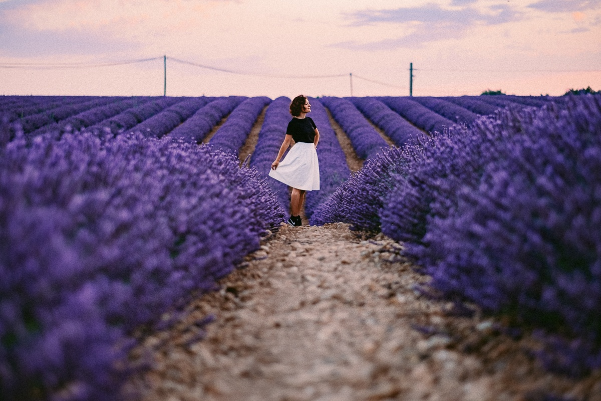 lavender fields provence travel guide