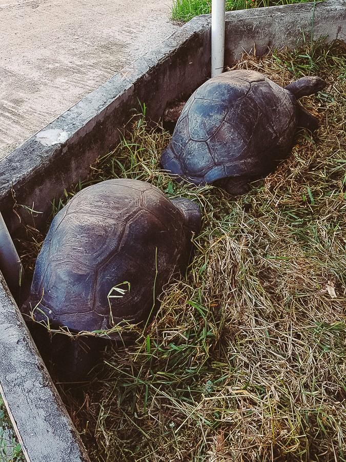 черепахи Сейшел