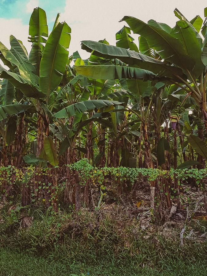советы туристам по острову Маэ