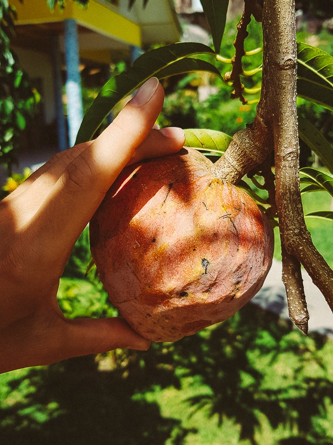 питание на Сейшельских островах