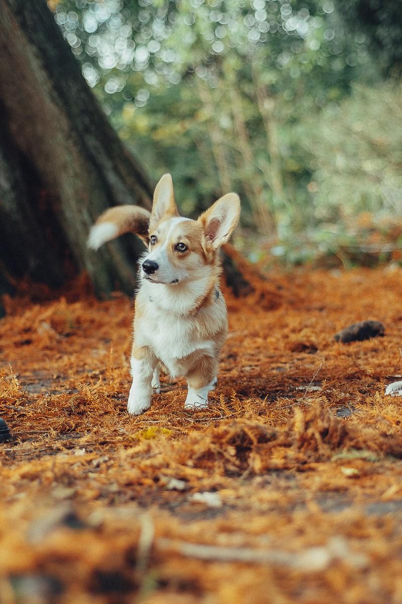 dog photographer in amsterdam